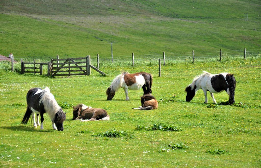 Reiseblogg, Shetlandsøyene