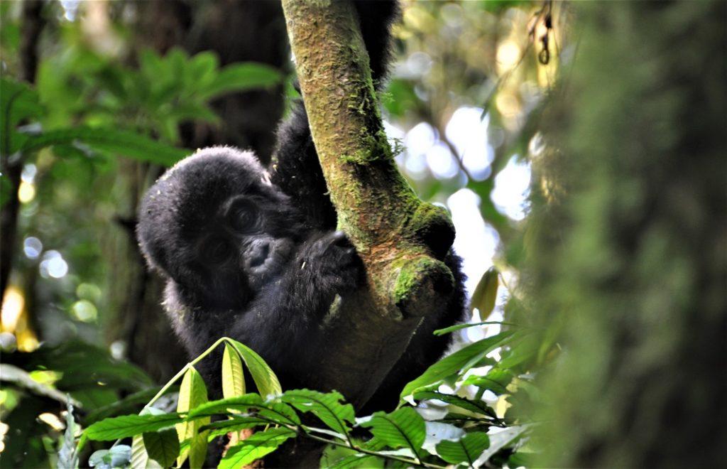 Reiseblogg, Afrika, Uganda
