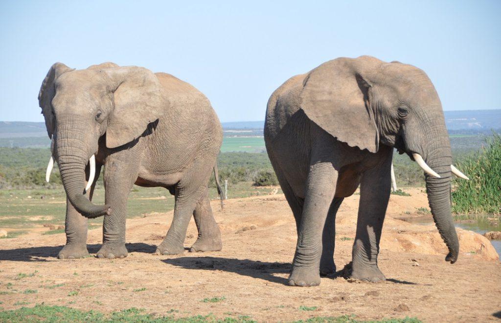 Reiseblogg, Afrika, Sør-Afrika